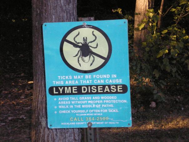 Lyme Disease 101 - Chimney and Wildlife