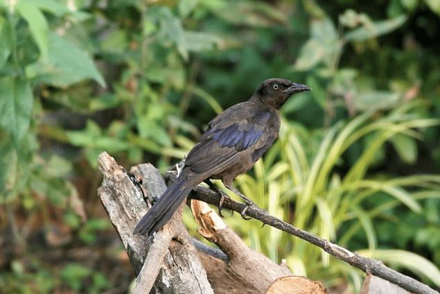 Birds  Texas  List of Birds  Sabinal River Valley