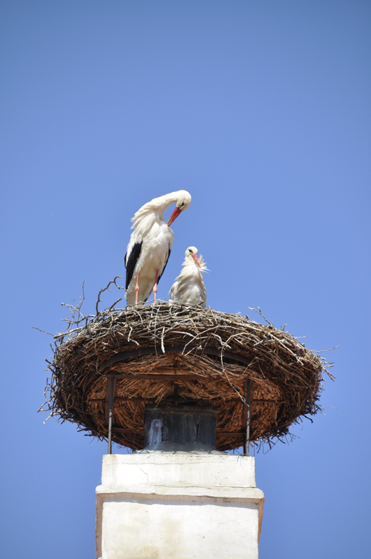birds nest on chimney